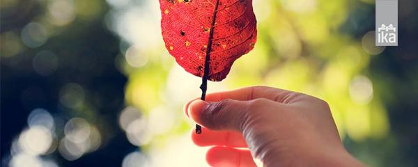 Jesen v trgovini IKA